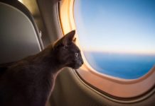 Кот, Самолет, Иллюминатор