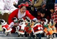 Южная Корея, Новый год